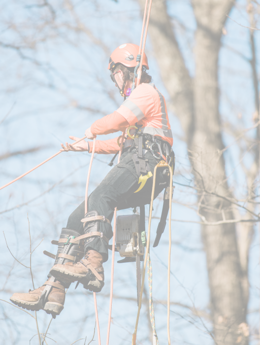 Integrity Tree Service policies