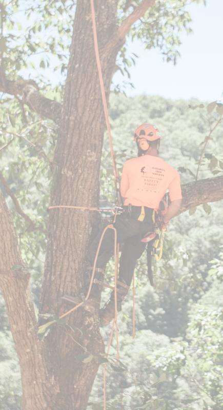 tree worker jobs near me