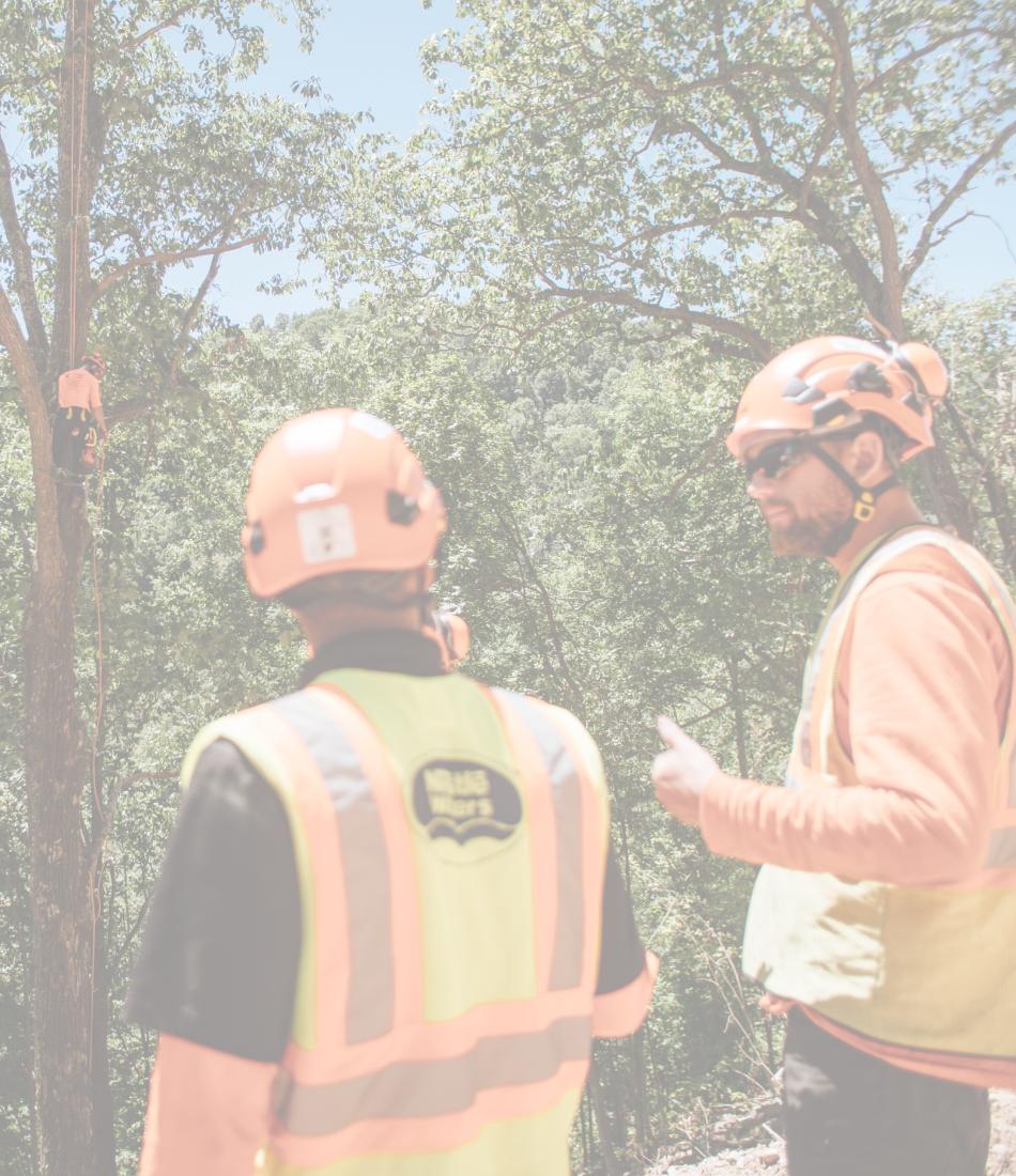 safe tree service company