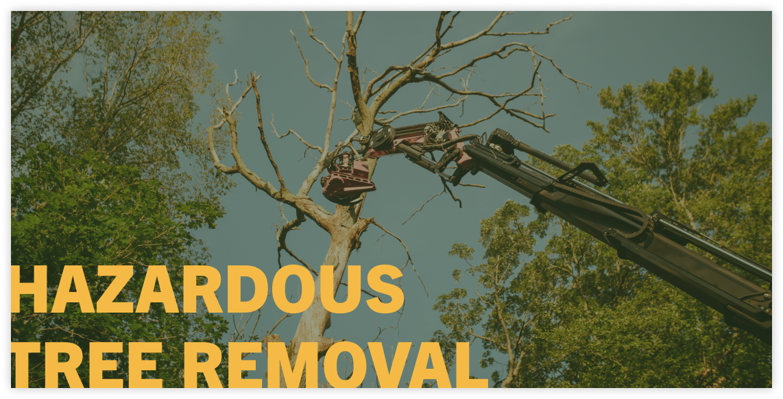 hazardous tree removal service
