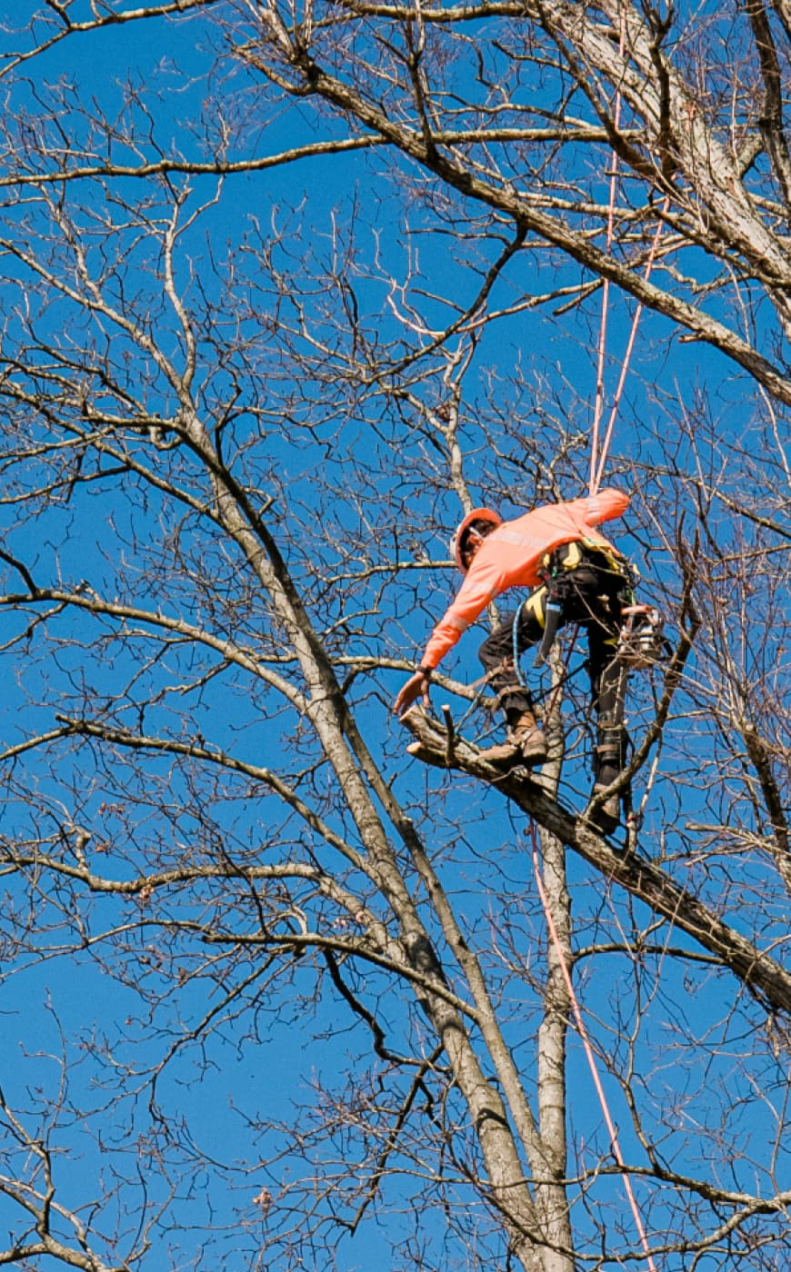tree service company with good safety record