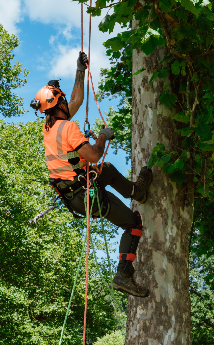 best tree service company near me