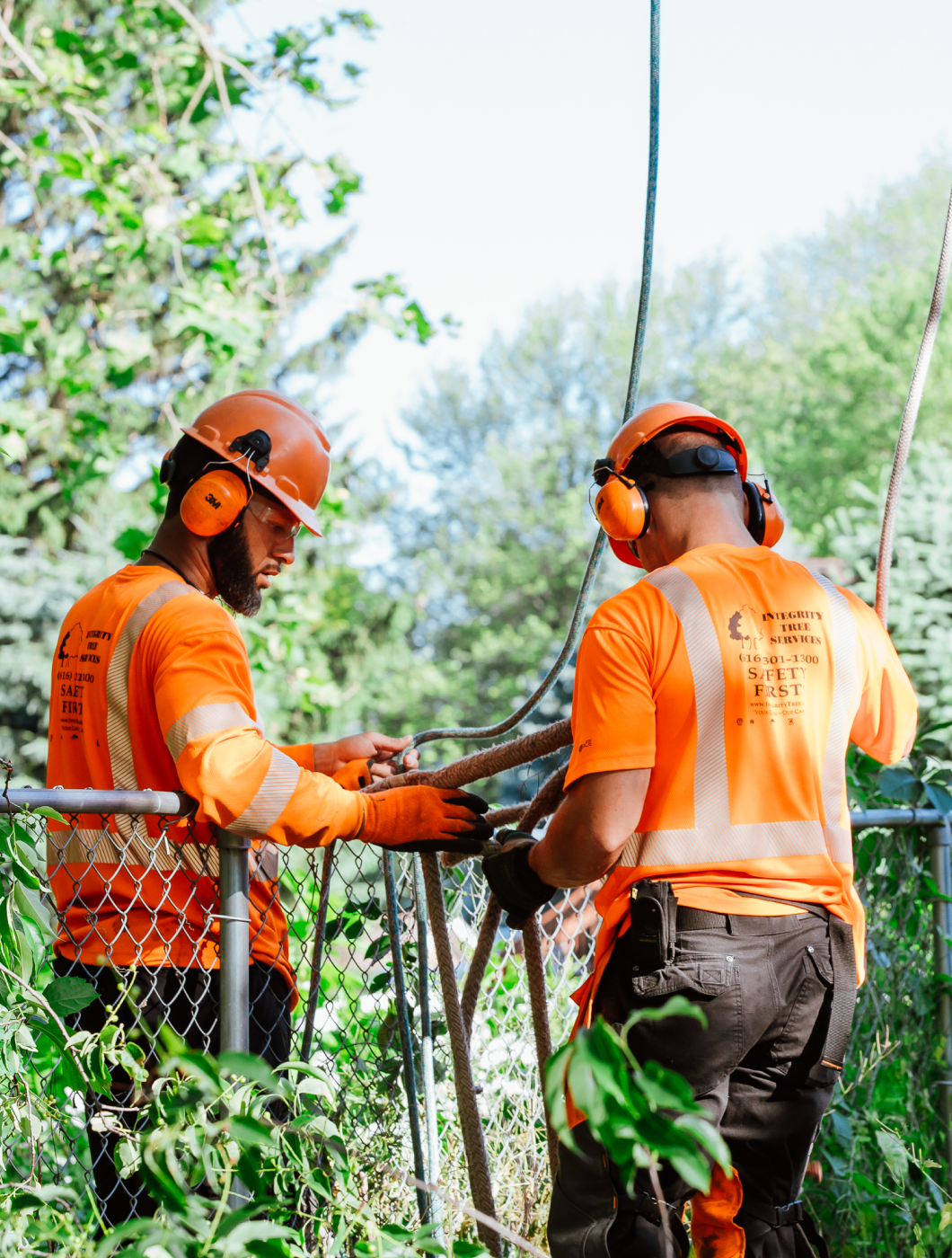 safe tree workers