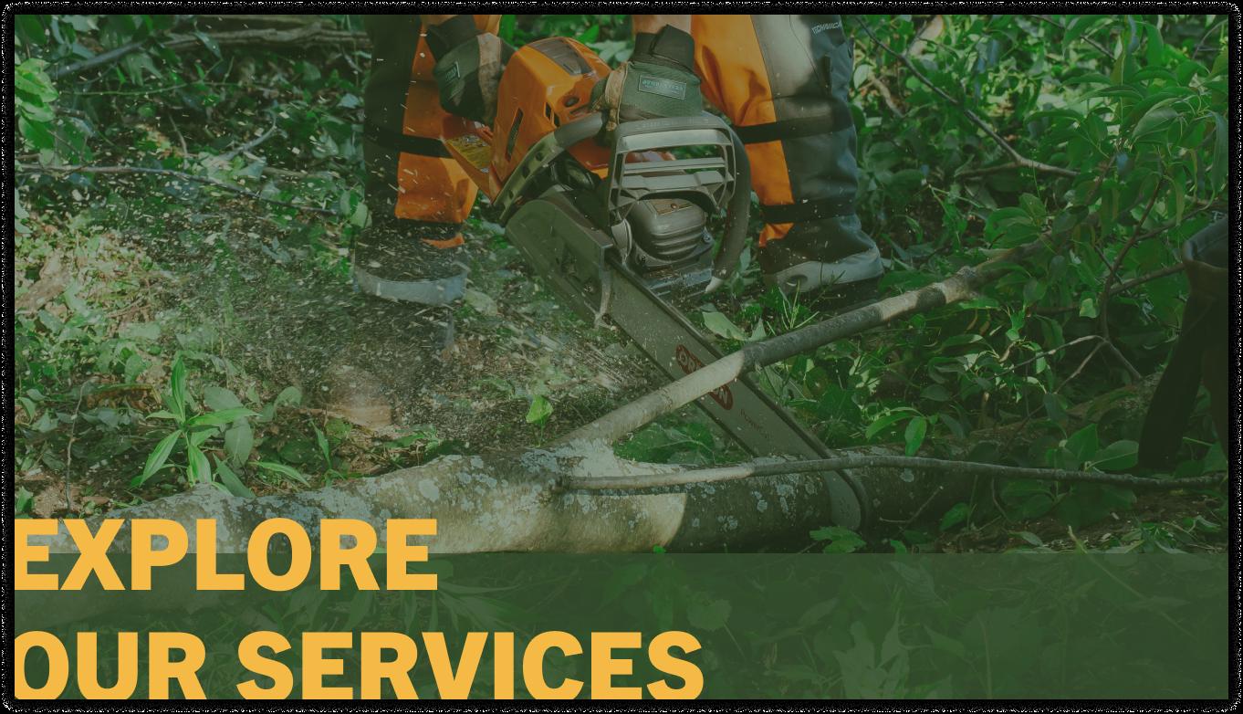 tree service company near me