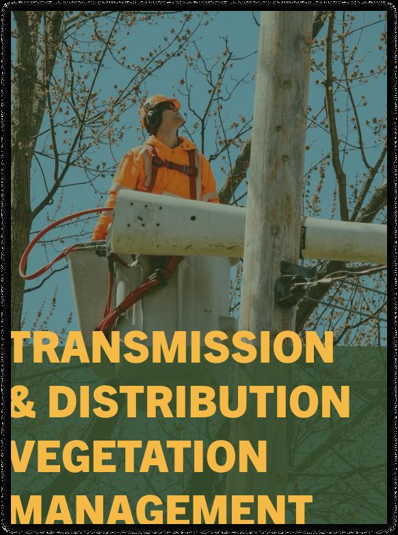 vegetation management service
