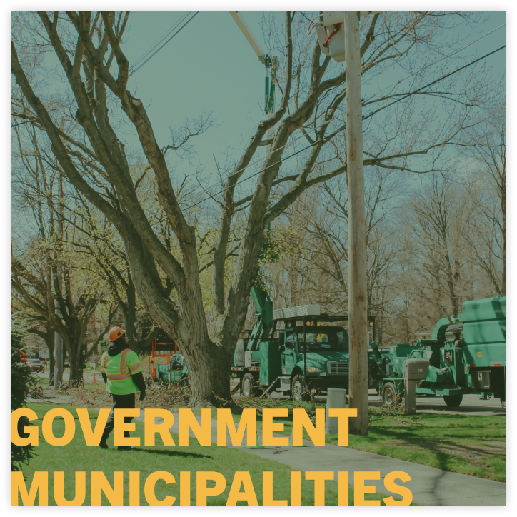 tree services for government municipalities