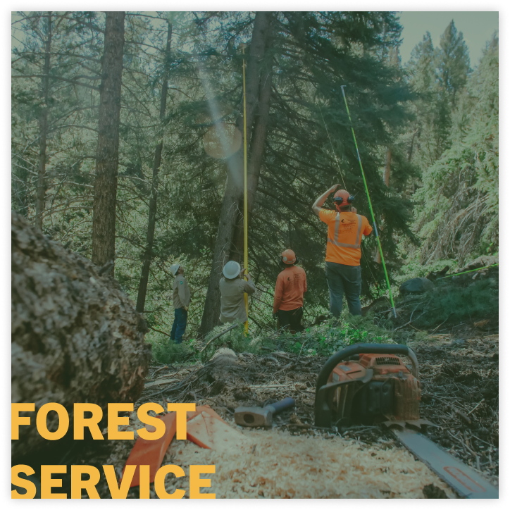 fire break tree trimming service US forest